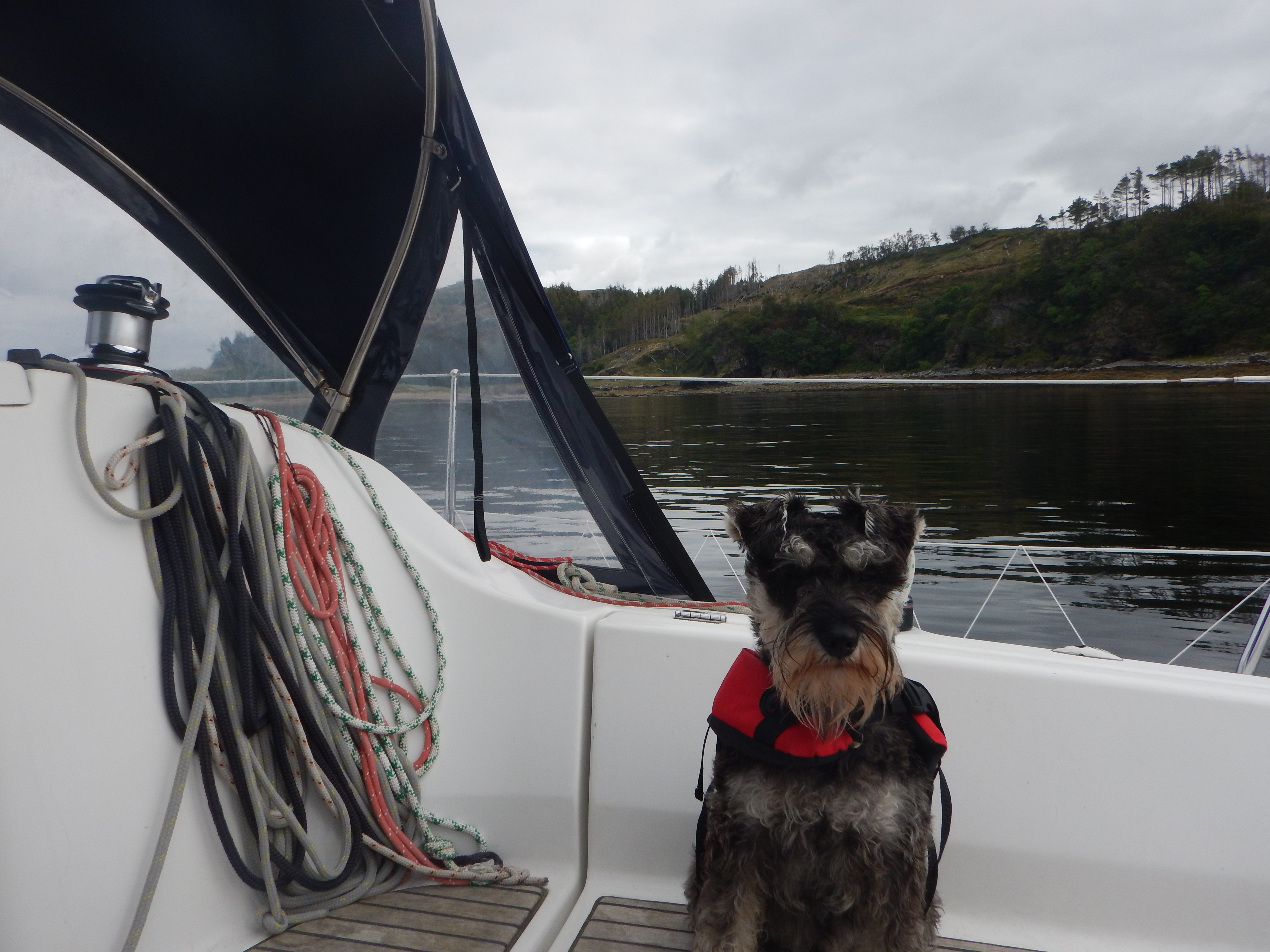 Dog, Boat and Scotland in landscape